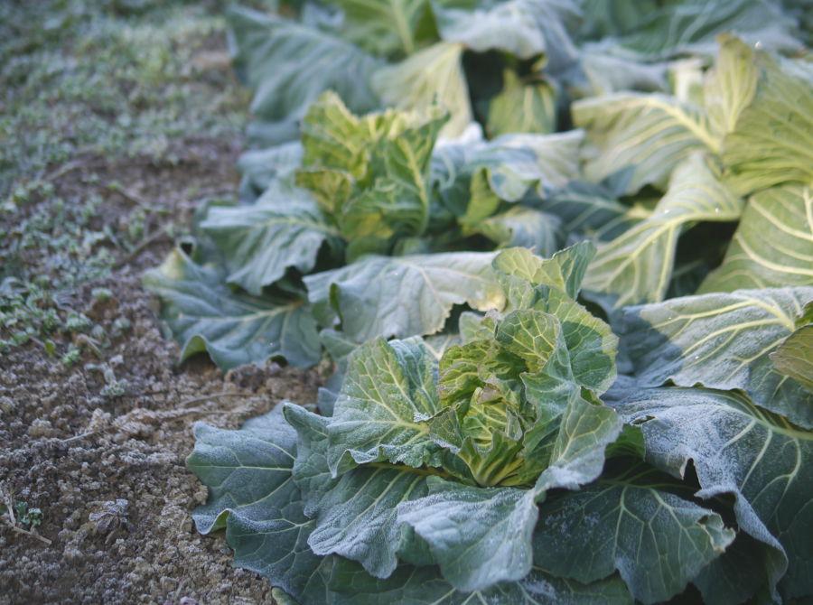 無肥料自然栽培家族「そよかぜ農園」